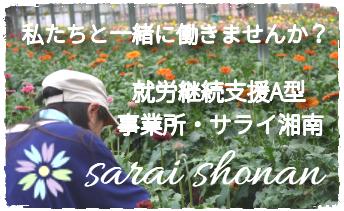 ciel works 合同会社 サライ湘南 乗馬クラブ ガーベラ菜園